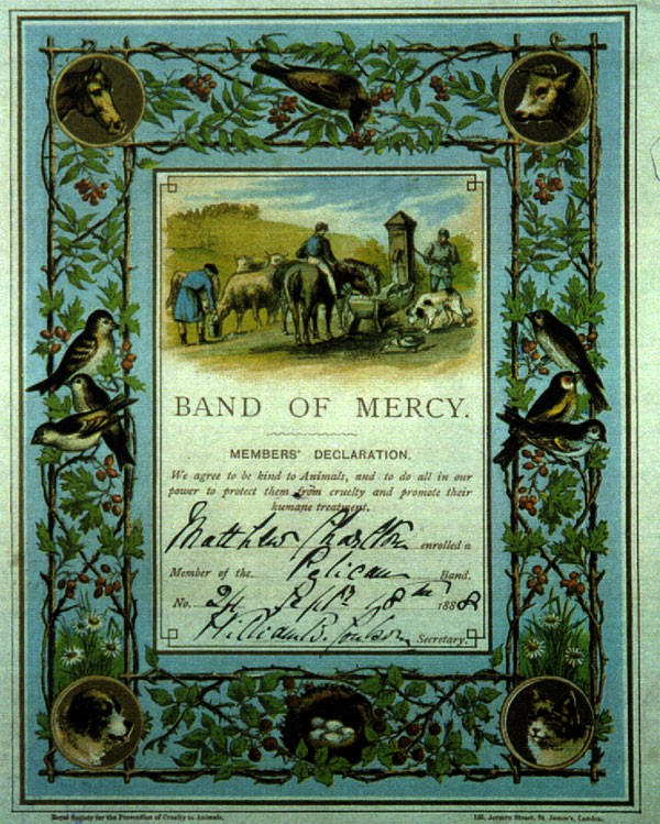 Band of Mercy